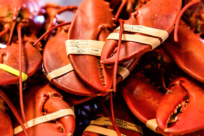 Marblehead restaurant lobsters